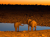 Elephant drinking from a waterhole by Blaine Harrington