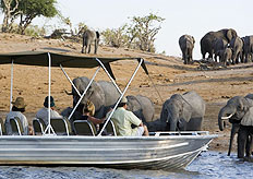The Caprivi is home to 450 animal species, including elephants, making it a popular game-watching destination